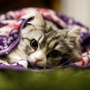 猫好き風呂好き